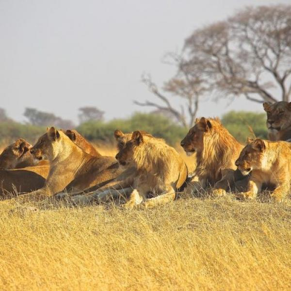 6 Days Group join safaris